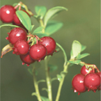 Unusual Berries